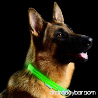 Pet Indutries Metal Buckle LED Dog Collar  USB Rechargeable. - B019LKQ2GU