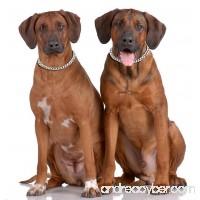 Freezx Dog Choke Collar Slip P Chain - Heavy Chain Dog Titan Training Choke Collars - Adjustable Stainless Steel Chain Dog Collars Covered with Galvanic Plating - Best for Small Medium Large Dogs - B078WRS5MR